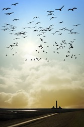 Lighthouse in Westerhever at the evening sunset with sun and birds