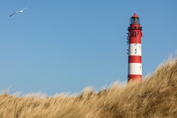 Lighthouse of German North Sea island Amrum behind dune grass seagull flying by