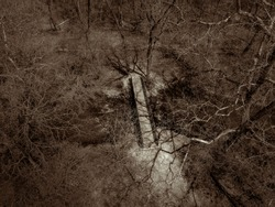Lighting the Way - light from the sun coming down through the trees to the footbridge across the creek in the forest.  Black and white aerial photo via drone taken in Beavercreek, Ohio