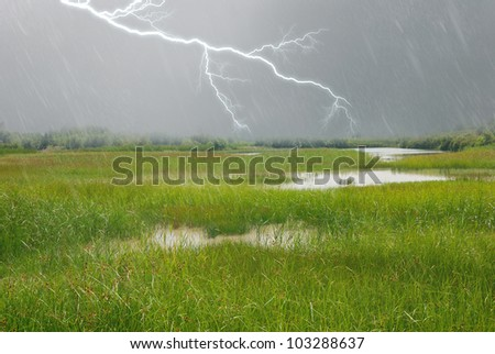 lightning and rain over the swamp
