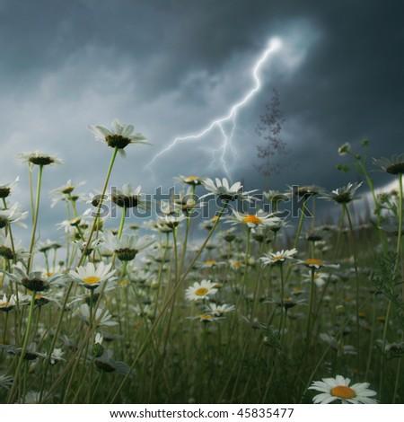 Lightning strike over daisy field.