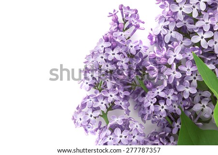Lilac blossom isolated on white background with empty space for lilac blossom isolated on white background with empty space for greeting message mothers day and m4hsunfo