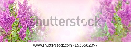 Lilac blossom, lilac in bloom, flowering lilac bush, beautiful flowering lilac