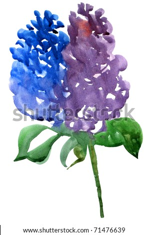Lilac branch. Watercolor illustration on a white background.