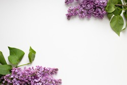 lilac branches on a white background in the corner