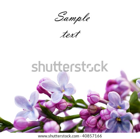 Lilac flower Isolated on White Background (With sample text)