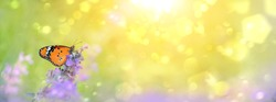 lilac flowers and butterfly on meadow sunny background. gentle summer natural landscape. banner, copy space
