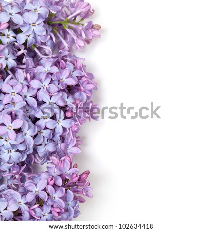 lilac flowers and empty space for your text
