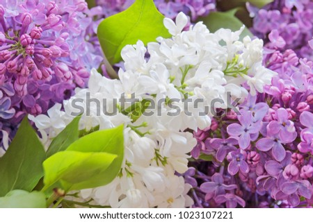 Lilac flowers background #1023107221