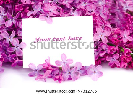 Lilac flowers branch isolated on white background with sample text