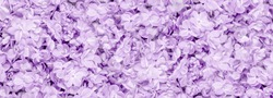 Lilac flowers closeup on tender violet background. Full frame. Spring flowers for birthday Mothers or Womens Day greeting card. Copy space. Wedding border banner. monochrome amethyst banner