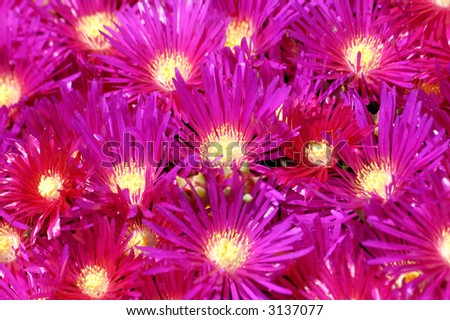 lilac flowers, floral background