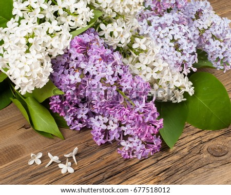 Lilac flowers large garden shrub with purple or white fragrant lilac flowers large garden shrub with purple or white fragrant flowers mightylinksfo