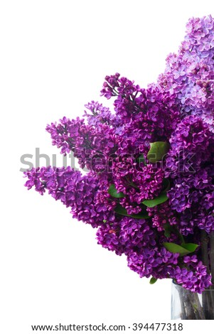 Lilac fresh  flowers close up isolated over white background #394477318