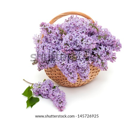 lilac over white #145726925