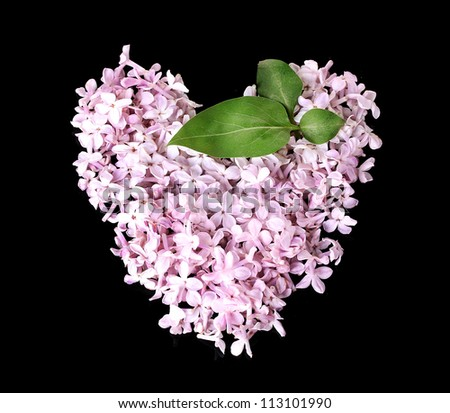 Lilac petals in heart shape isolated on black