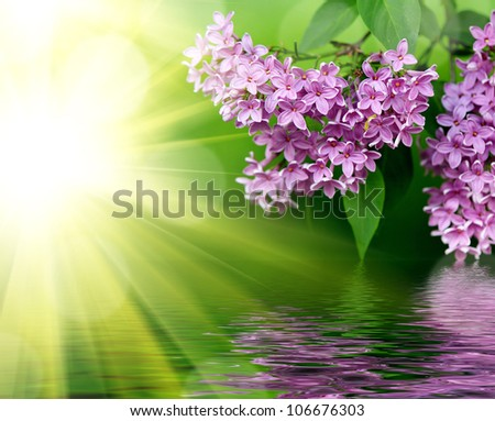 Lilac pink flowers on a background of green leaves