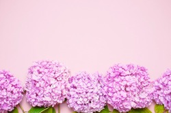 Lilac pink hydrangea flower on pastel pink background flat lay. Mothers Day, Birthday, Valentines Day, Womens Day, celebration concept. Top view Floral background.
