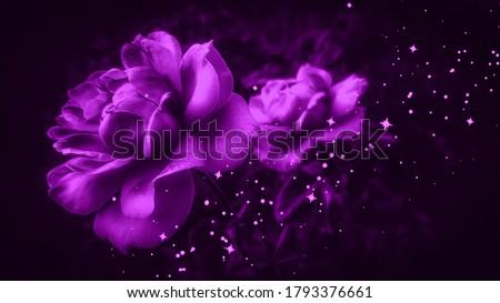 Lilac roses against black background. Violet roses isolated on black. Purple roses background. Lilac floral backdrop. Violet floral backdrop. Sparkling backgrounds. Glittering background.