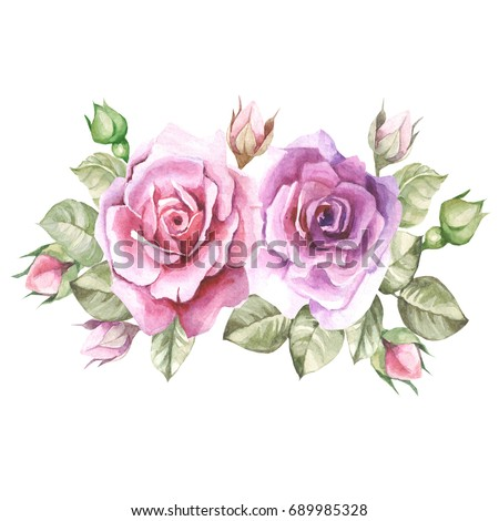 lilac roses.watercolor