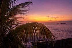 lilac sunrise with the coconut leaves in rio de janeiro city
