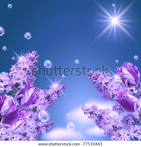 Lilac, tulip, magnolia, bubbles  and sun