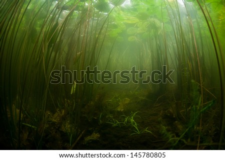 Lilies and other aquatic vegetation grow along the shallow edge of a pond in New England.  Freshwater ponds and lakes offer views of enclosed aquatic ecosystems.