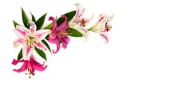 Lilies (Lily Dizzy) and pink lilies on a white background with space for text. Top view, flat lay