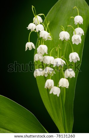 Lilies of the valley on green