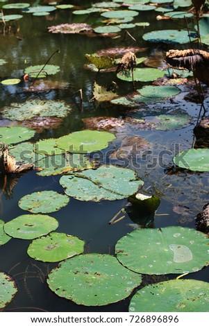 Lilly Pond #726896896