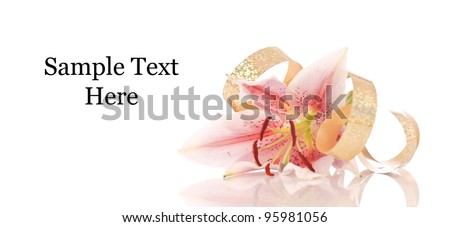Lily Flower and twirl of Gold Ribbon with Space for Text