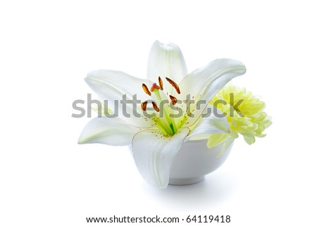 Lily flower in a bowl, isolated on white