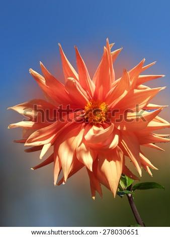 Lily flower/Lily flower/Lily flower