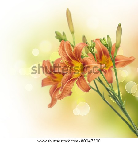 Lily Flowers border design.Summer Flowers