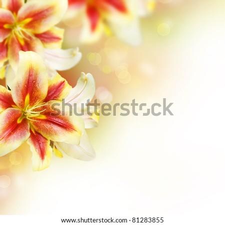 Lily Flowers border design.Summer Flowers