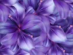lily flowers.  bright purple background. floral collage. flower composition. Nature.