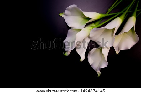 Lily flowers on the dark background place for a text.