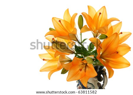 Lily in vase on a white background