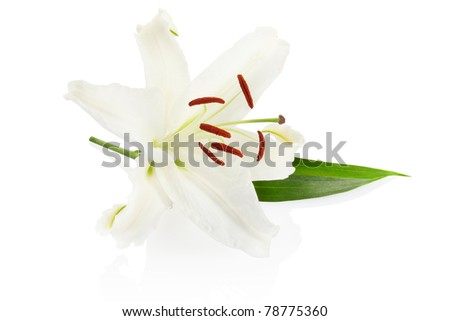 Lily isolated on white, clipping path included