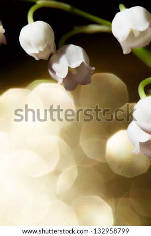 Lily of the valley - close up