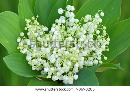 Lily of the valley (convallaria majalis) bouquet