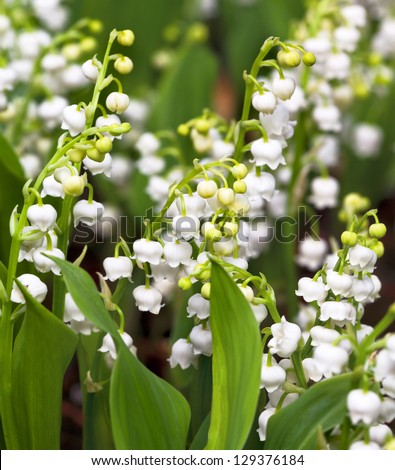 Lily of the valley. Floral pattern.