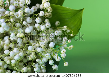 Lily of the valley flower, close-up on green background