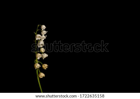 lily of the valley flower on black background ストックフォト ©