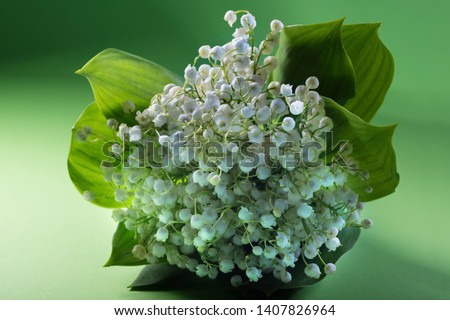 Lily of the valley flower on green background in studio