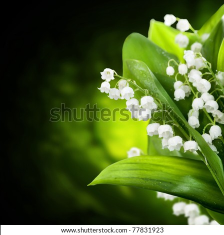 Stock Photo Lily-of-the-valley flowers design