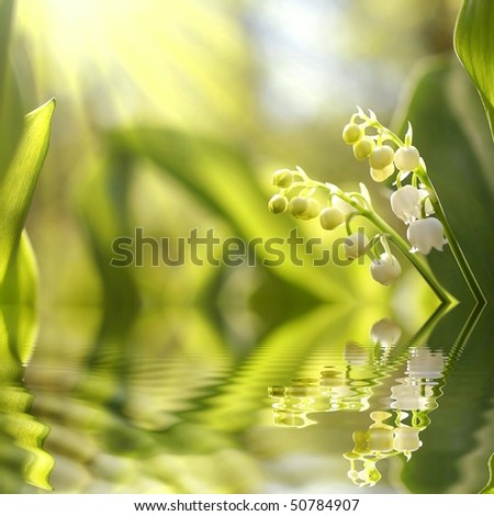 Lily of the valley growing in the woods in the morning sun.