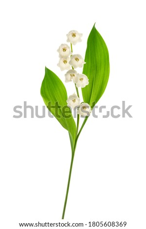 Lily of the valley  isolated on white background Foto stock ©