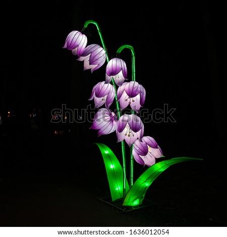 Lily of the valley on dark background. Lantern festival. Lantern produces mesmerize light.