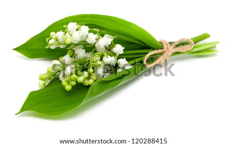 lily of the valley over white